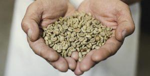 خواص قهوه سبز ؛ مزایای شگفت انگیز قهوه سبز برای کاهش وزن، پوست، مو و سلامتی