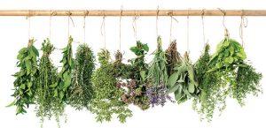گیاهان دارویی برای آرامش اعصاب – دمنوش های آرامش بخش و تسکین دهنده اعصاب