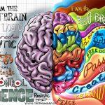 تفاوت عملکرد نیم کره راست و چپ مغز در چیست؟