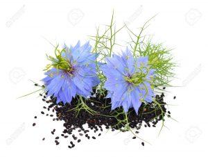 سیاه دانه / خواص سیاه دانه برای بدن و مضرات آن برای سلامتی