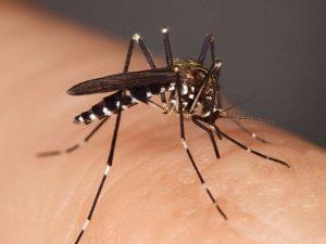 پشهگزیدگی / ۶ راه درمان پشه گزیدگی با روش های خانگی