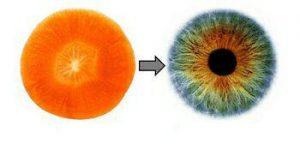 میوه ها و اعضای بدن انسان  .