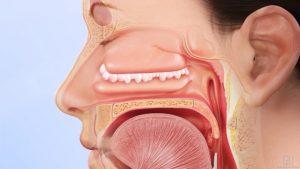 شناخت و درمان پولیپ بینی / راه های برای درمان طبیعی پولیپ بینی