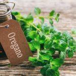 مرزنجوش گیاهی مفید برای پخت و پز و آروماتراپی می باشد.
