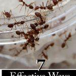 ۷ راه موثر برای از بین بردن مورچه ها به طور طبیعی