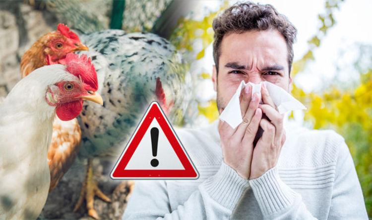 آنفلوانزای مرغی